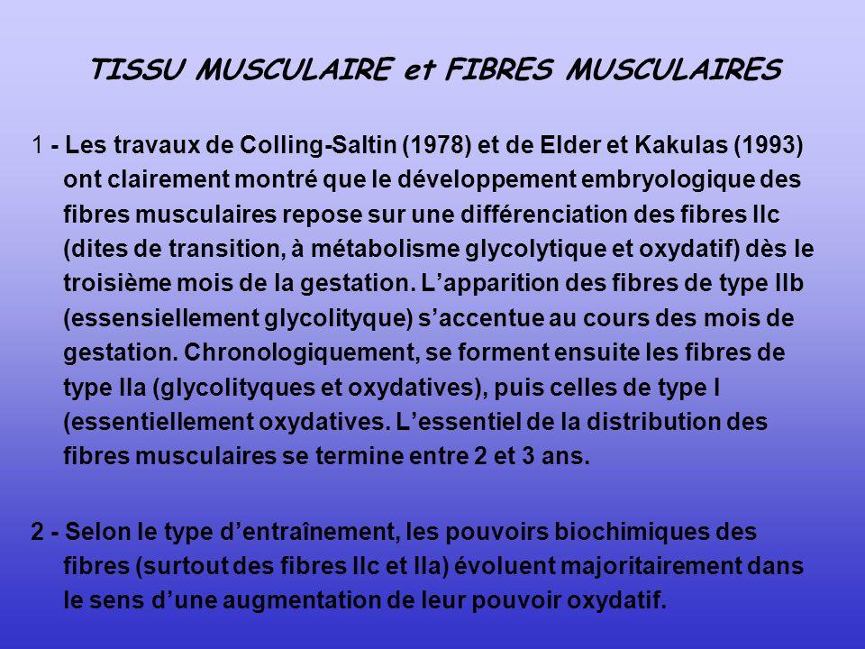 TISSU MUSCULAIRE et FIBRES MUSCULAIRES