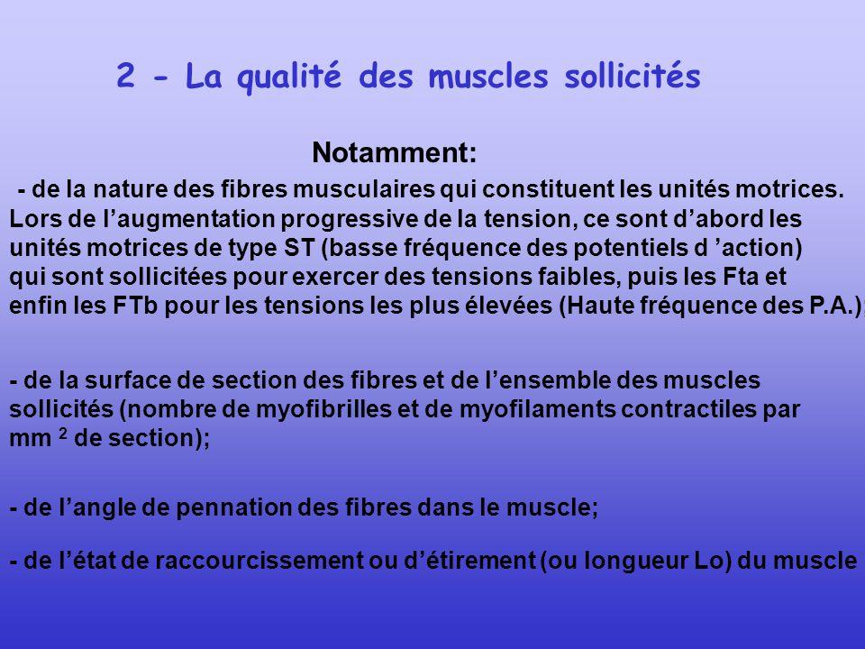 2 - La qualité des muscles sollicités