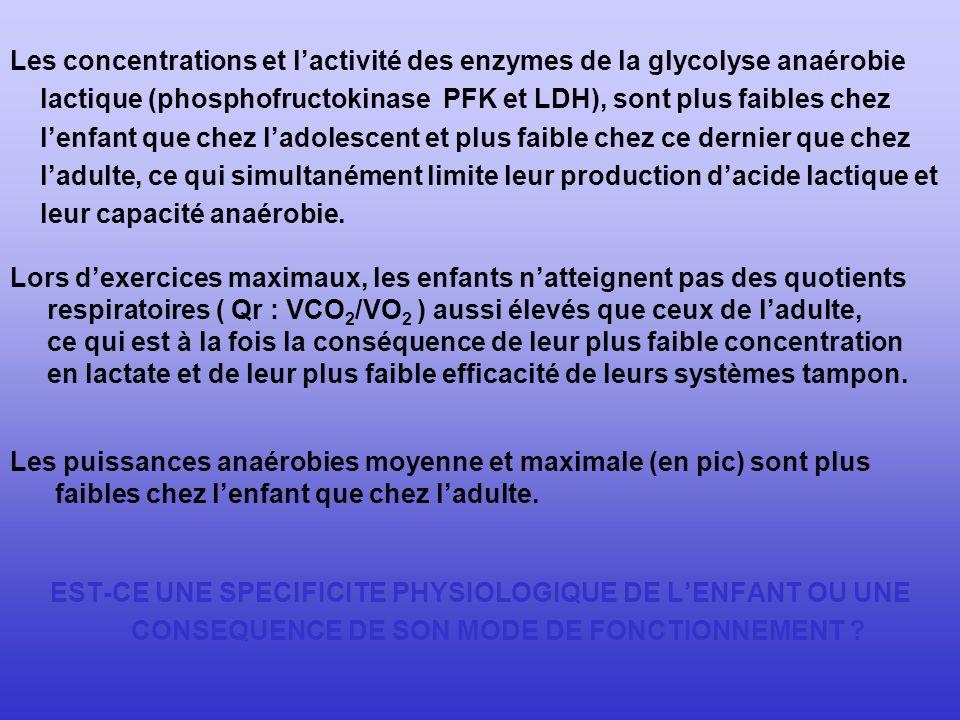 Les concentrations et l'activité des enzymes de la glycolyse anaérobie