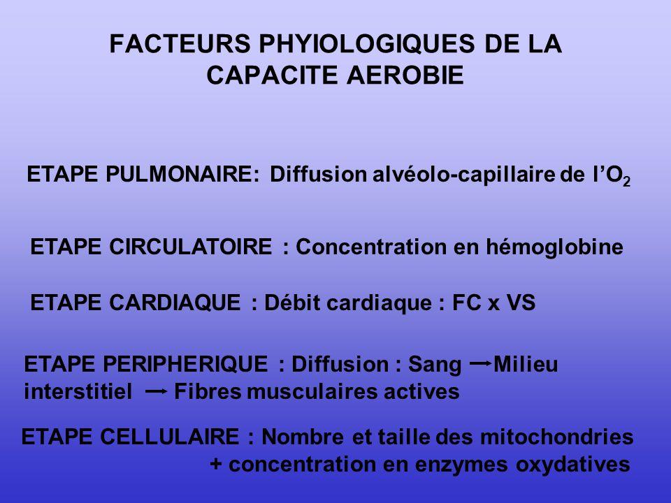 FACTEURS PHYIOLOGIQUES DE LA CAPACITE AEROBIE