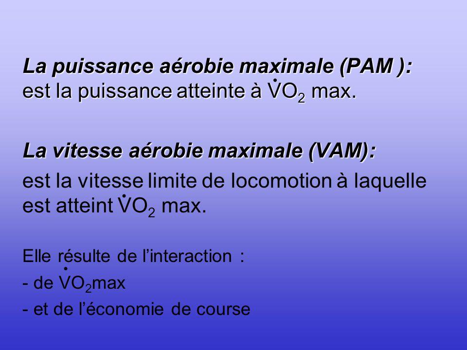 La vitesse aérobie maximale (VAM):