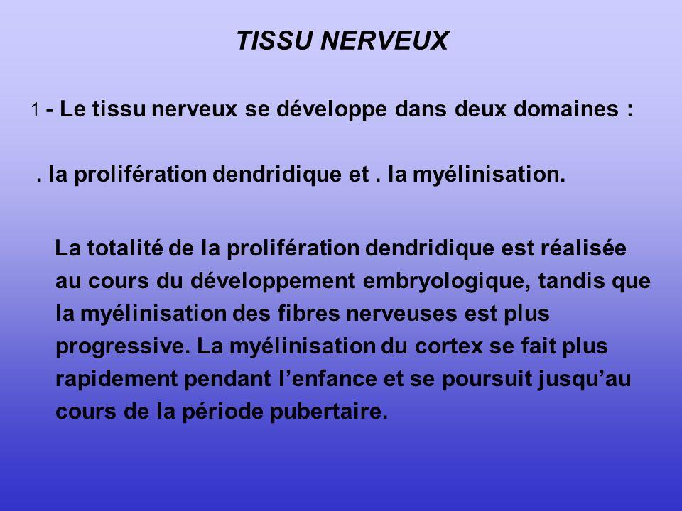 TISSU NERVEUX . la prolifération dendridique et . la myélinisation.