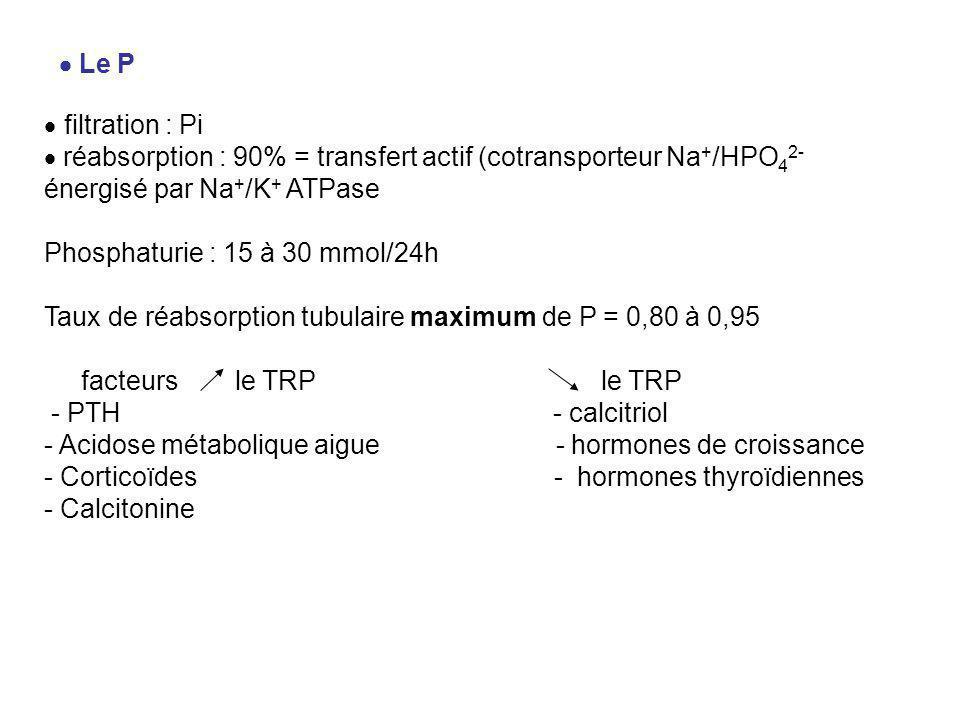  Le P  filtration : Pi. réabsorption : 90% = transfert actif (cotransporteur Na+/HPO42- énergisé par Na+/K+ ATPase.