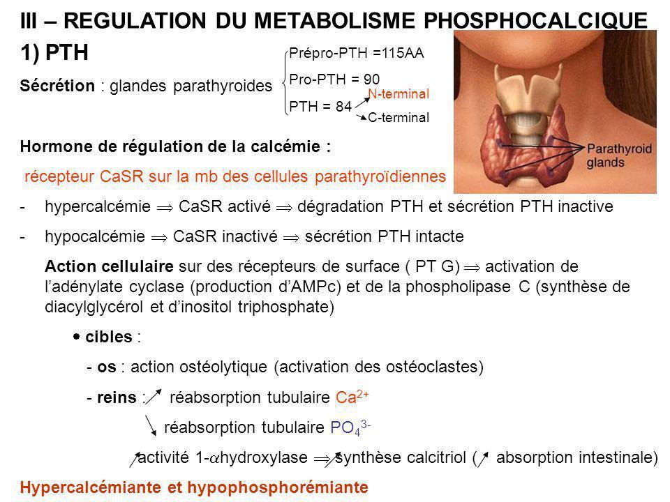 III – REGULATION DU METABOLISME PHOSPHOCALCIQUE PTH