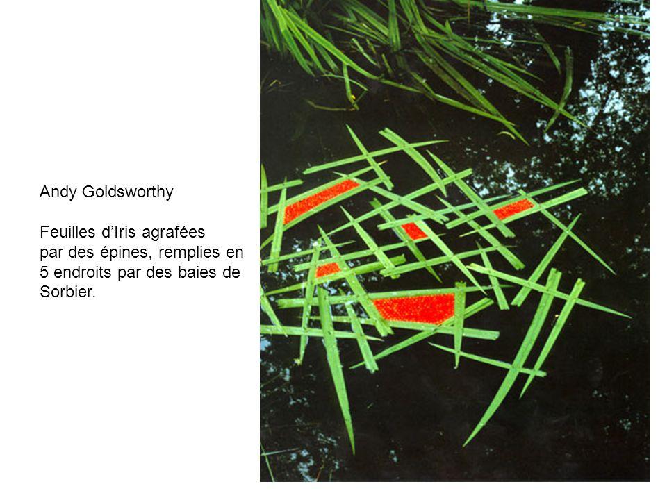 Andy Goldsworthy Feuilles d'Iris agrafées. par des épines, remplies en. 5 endroits par des baies de.