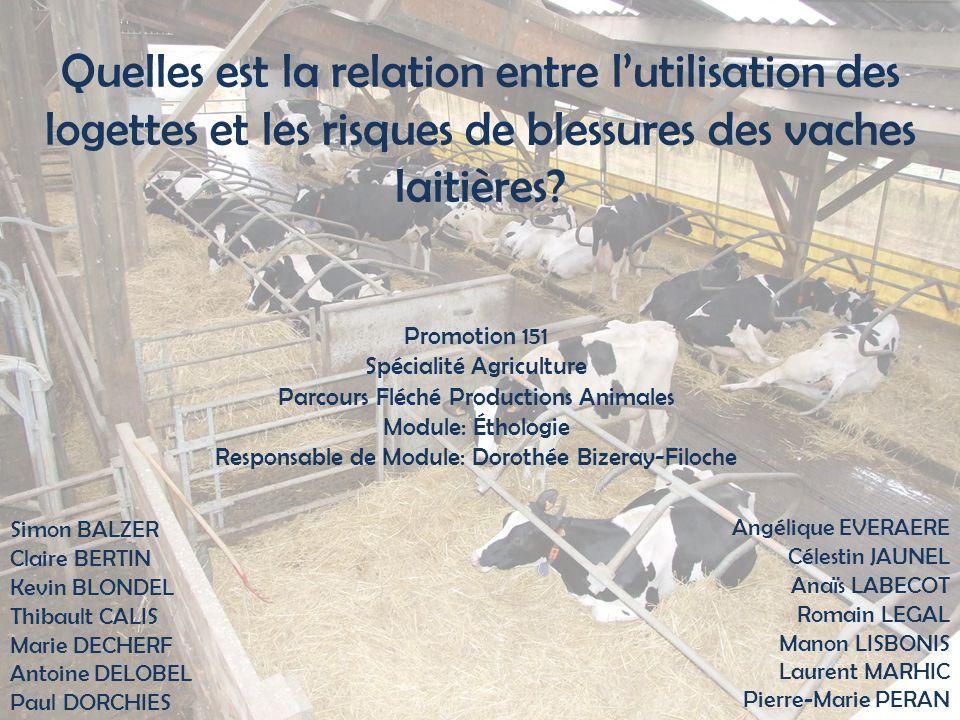 Quelles est la relation entre l'utilisation des logettes et les risques de blessures des vaches laitières