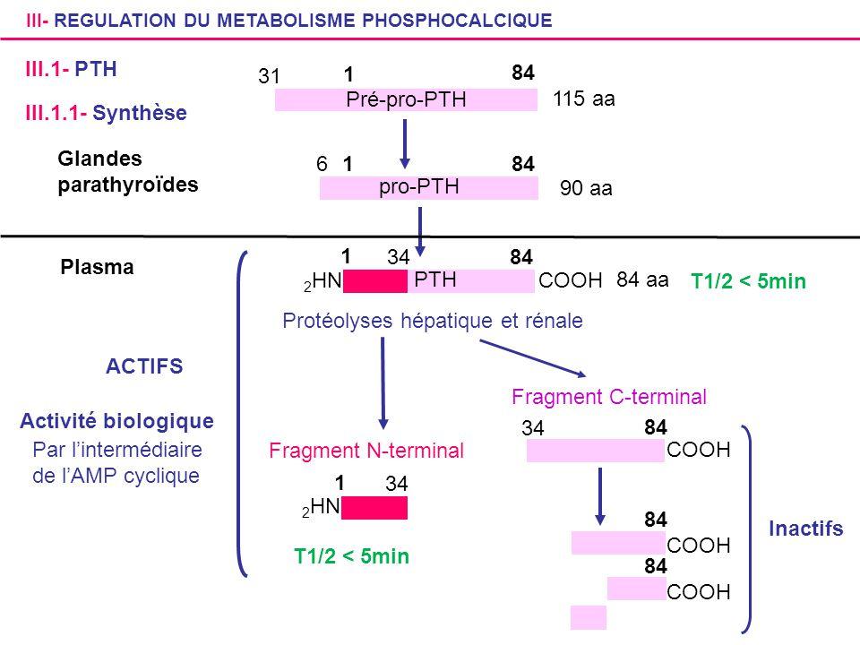 Glandes parathyroïdes 1 6 84 pro-PTH 90 aa