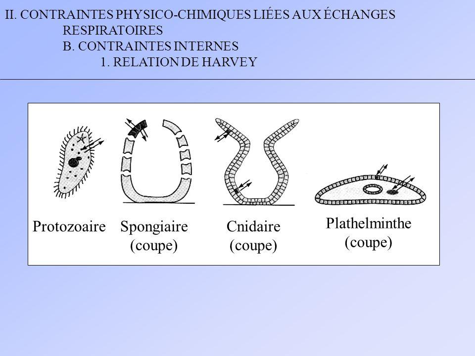 Plathelminthe (coupe) Protozoaire Spongiaire (coupe) Cnidaire (coupe)