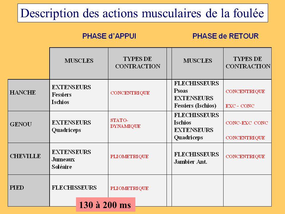 Description des actions musculaires de la foulée