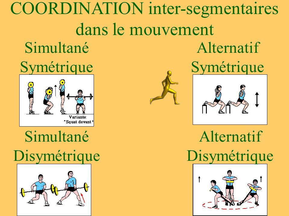 COORDINATION inter-segmentaires dans le mouvement