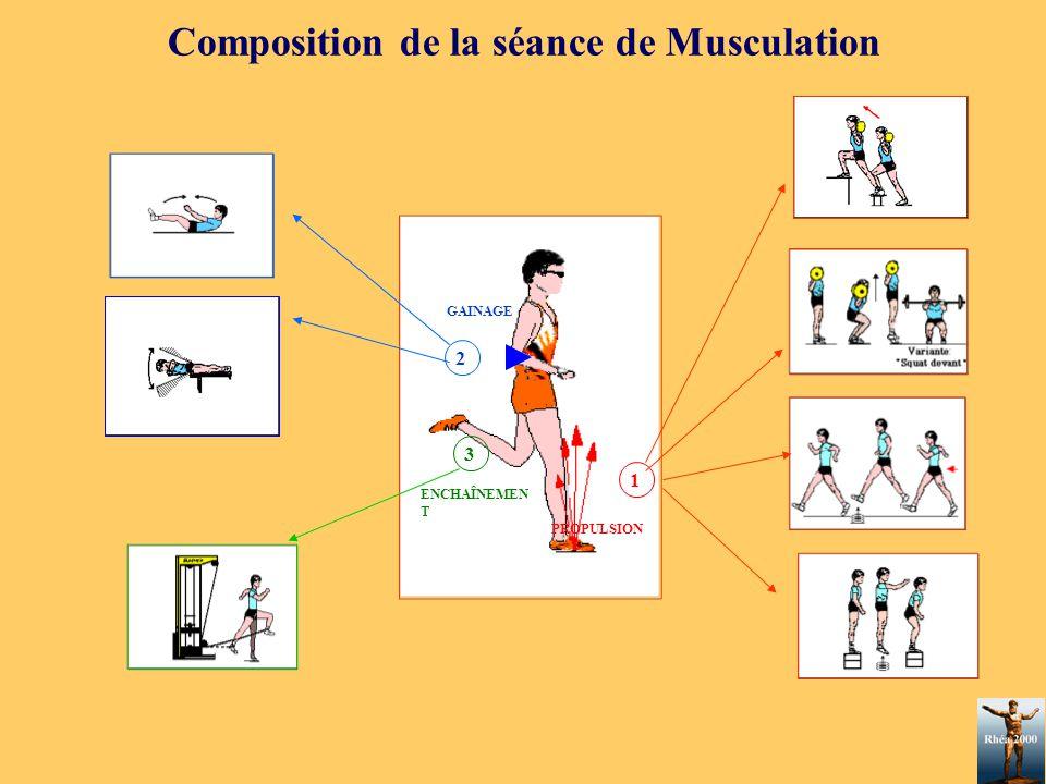 Composition de la séance de Musculation