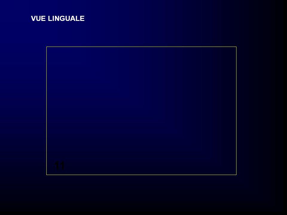 VUE LINGUALE 11