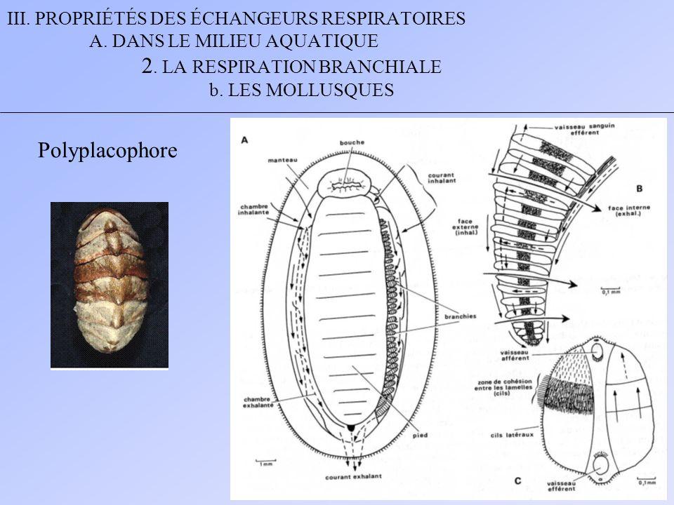 III. PROPRIÉTÉS DES ÉCHANGEURS RESPIRATOIRES A