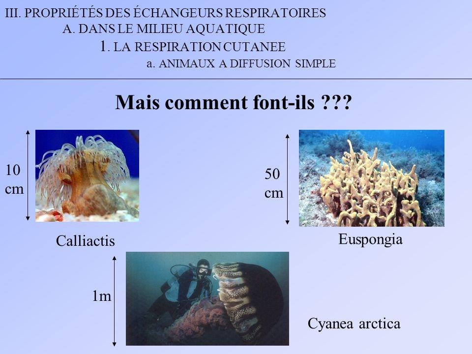 Mais comment font-ils 10 50 cm cm Euspongia Calliactis 1m