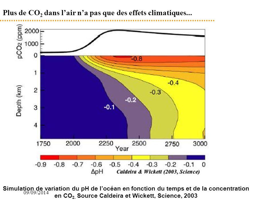 Plus de CO2 dans l'air n'a pas que des effets climatiques...