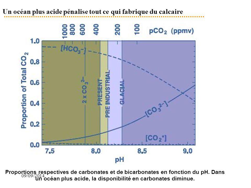 Un océan plus acide pénalise tout ce qui fabrique du calcaire