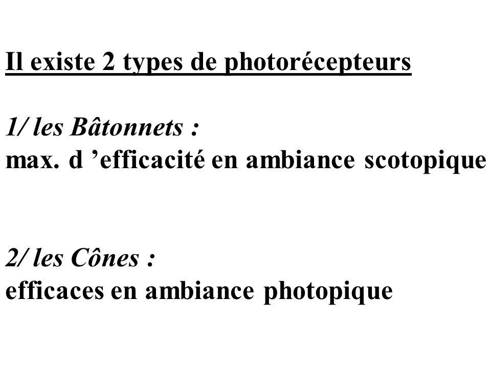 Il existe 2 types de photorécepteurs