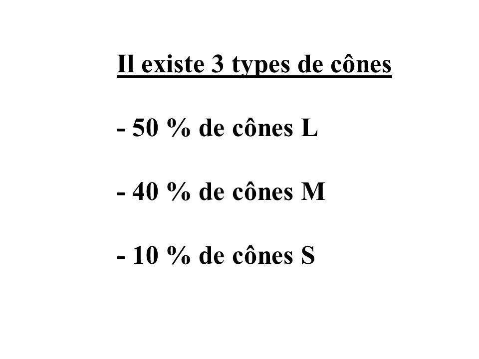 Il existe 3 types de cônes