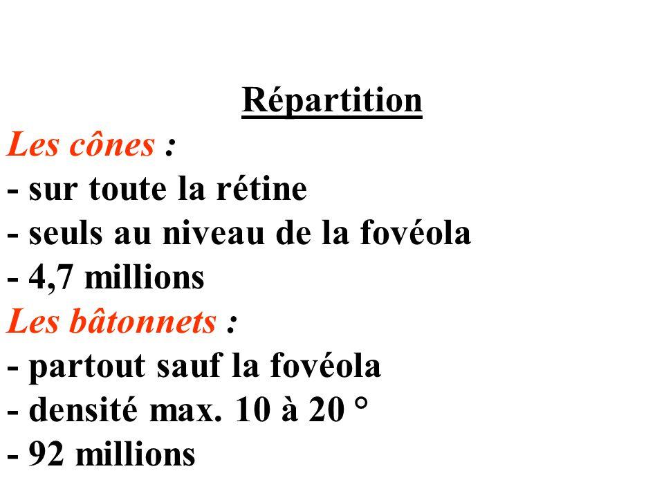 Répartition Les cônes : - sur toute la rétine. - seuls au niveau de la fovéola. - 4,7 millions. Les bâtonnets :