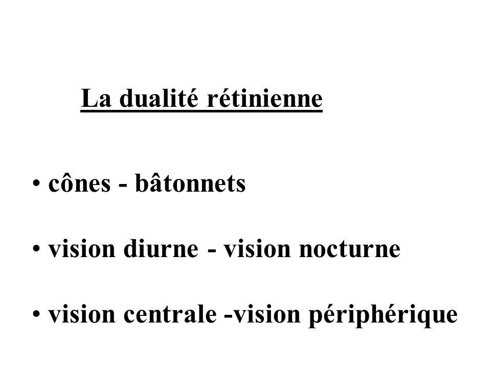 vision diurne - vision nocturne vision centrale -vision périphérique