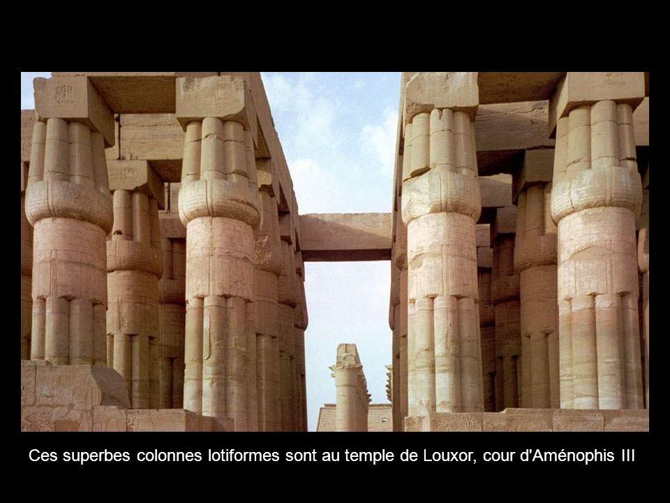 Ces superbes colonnes lotiformes sont au temple de Louxor, cour d Aménophis III