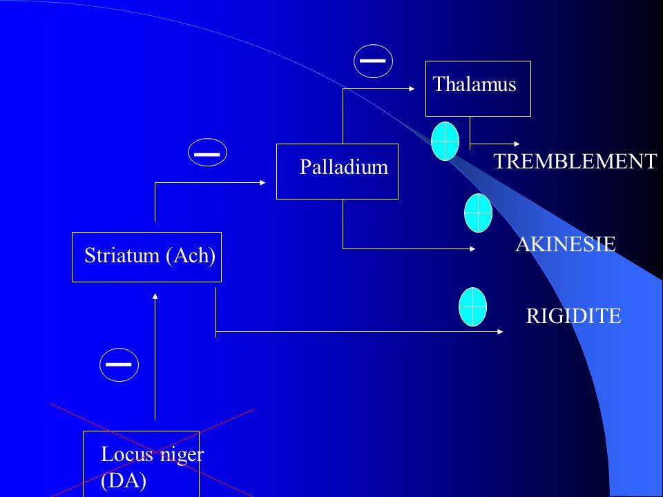 _ _ _ Thalamus TREMBLEMENT Palladium AKINESIE Striatum (Ach) RIGIDITE