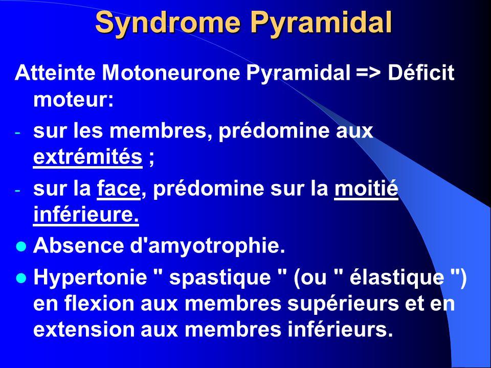 Syndrome Pyramidal Atteinte Motoneurone Pyramidal => Déficit moteur: sur les membres, prédomine aux extrémités ;