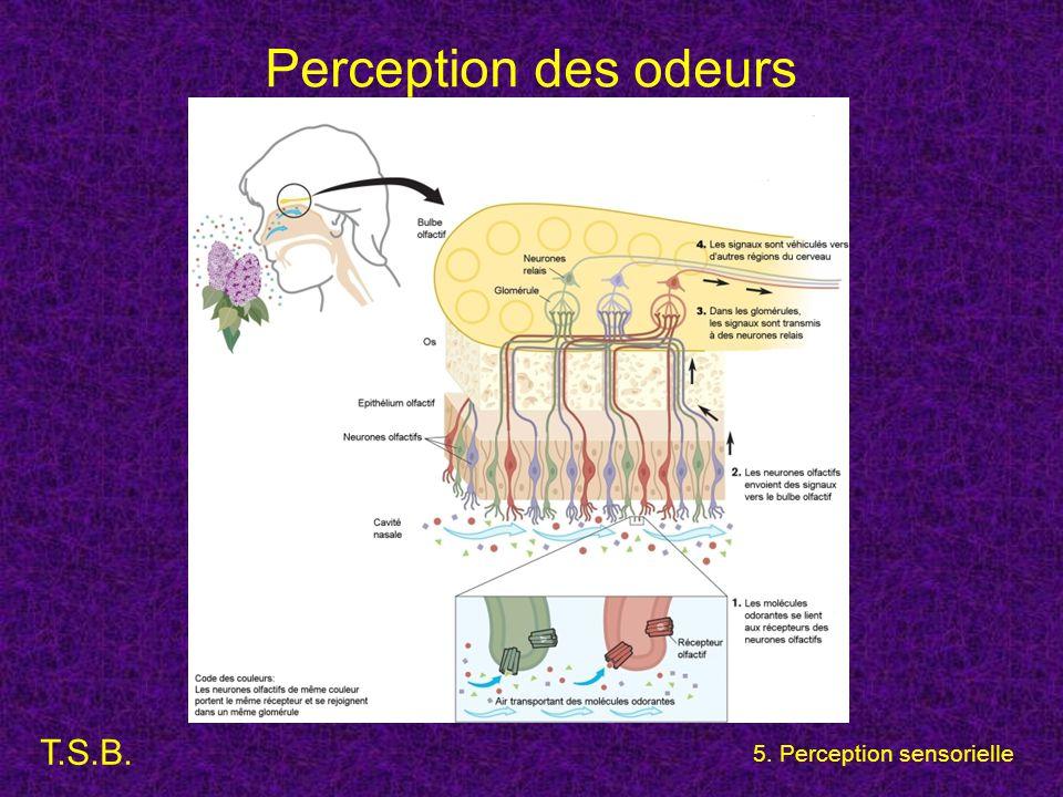 Perception des odeurs