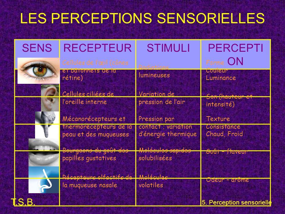 LES PERCEPTIONS SENSORIELLES