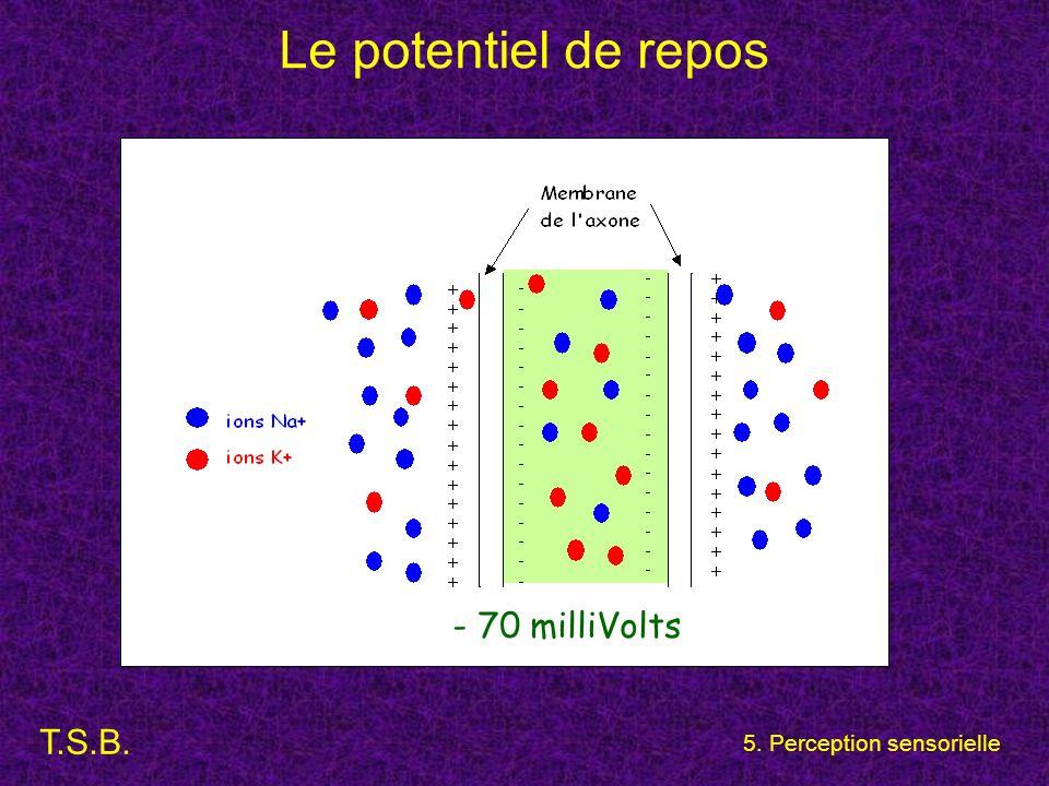 Le potentiel de repos - 70 milliVolts