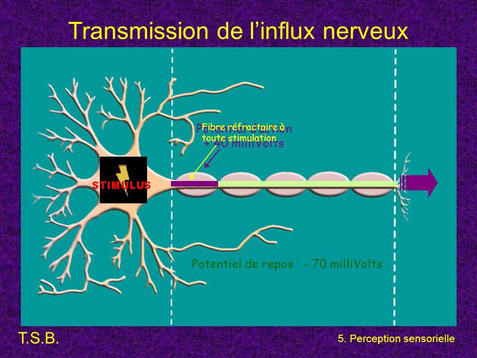 Transmission de l'influx nerveux