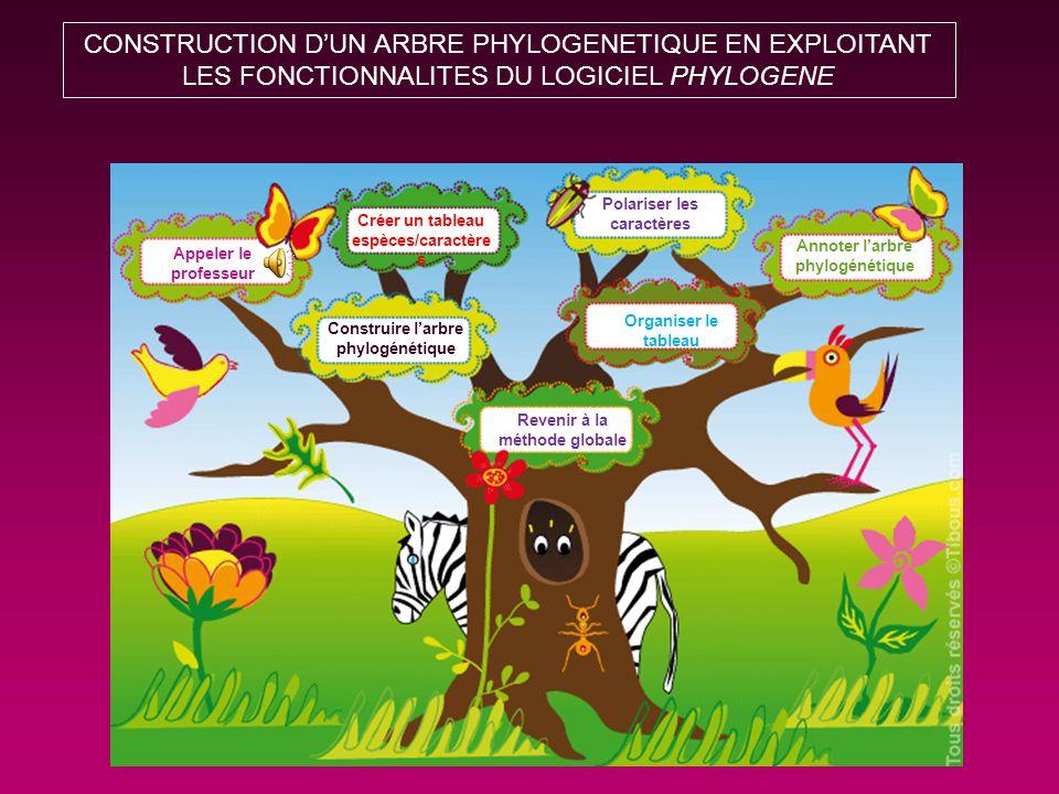 CONSTRUCTION D'UN ARBRE PHYLOGENETIQUE EN EXPLOITANT LES FONCTIONNALITES DU LOGICIEL PHYLOGENE