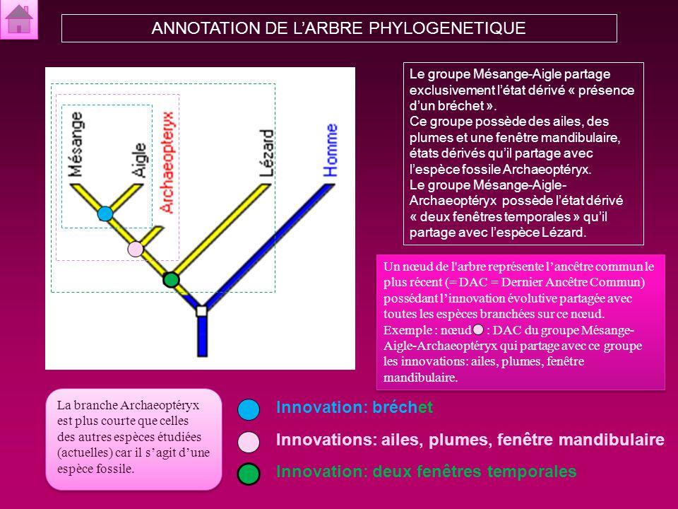 ANNOTATION DE L'ARBRE PHYLOGENETIQUE
