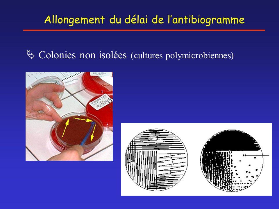Allongement du délai de l'antibiogramme
