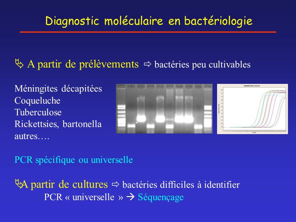 Diagnostic moléculaire en bactériologie