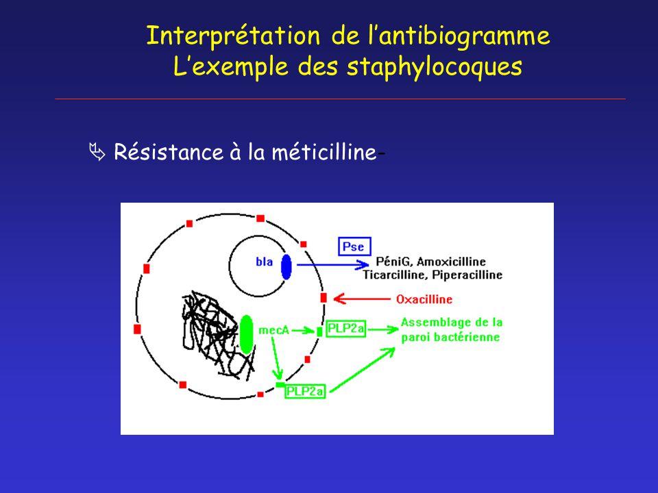 Interprétation de l'antibiogramme L'exemple des staphylocoques