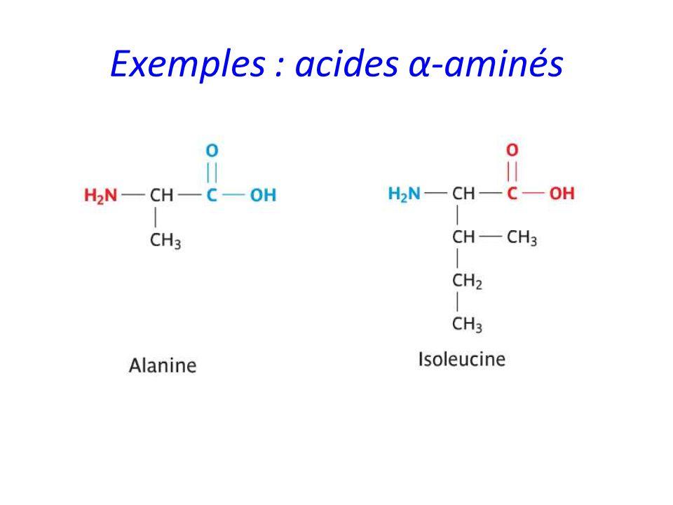 Exemples : acides α-aminés