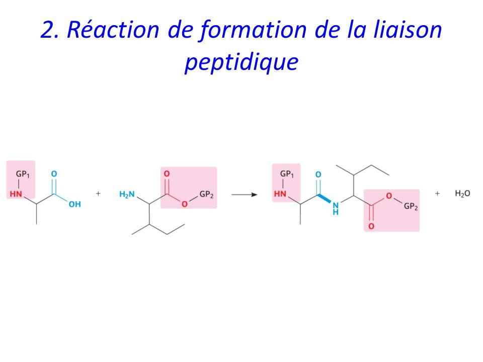 2. Réaction de formation de la liaison peptidique