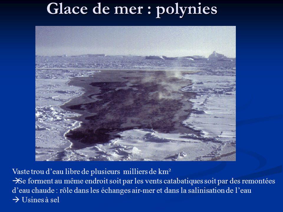 Glace de mer : polynies Vaste trou d'eau libre de plusieurs milliers de km².