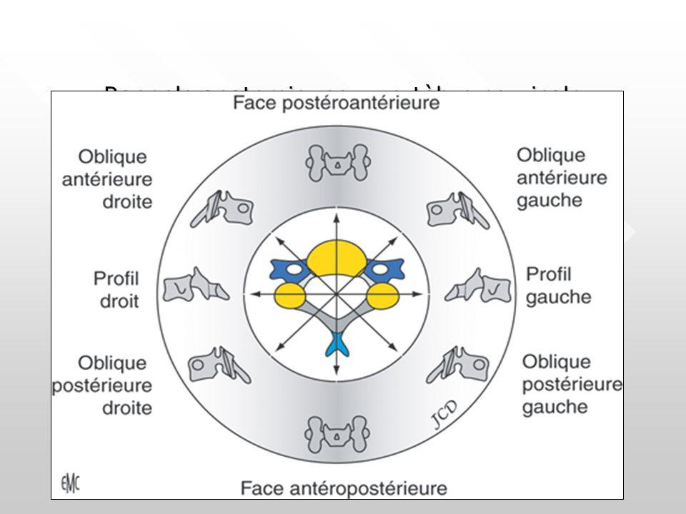 Rappels anatomiques : vertèbre cervicale
