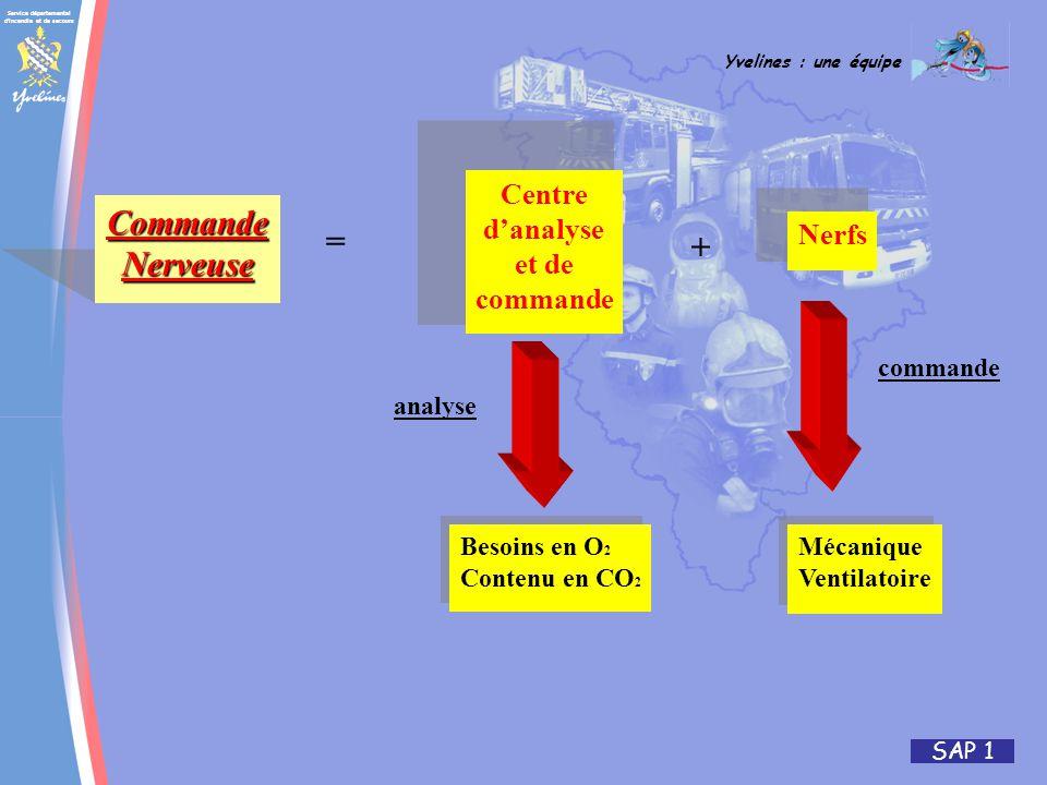 Commande Nerveuse = + Centre d'analyse et de Nerfs commande commande