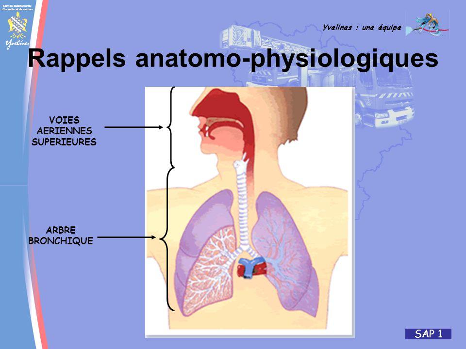 Rappels anatomo-physiologiques