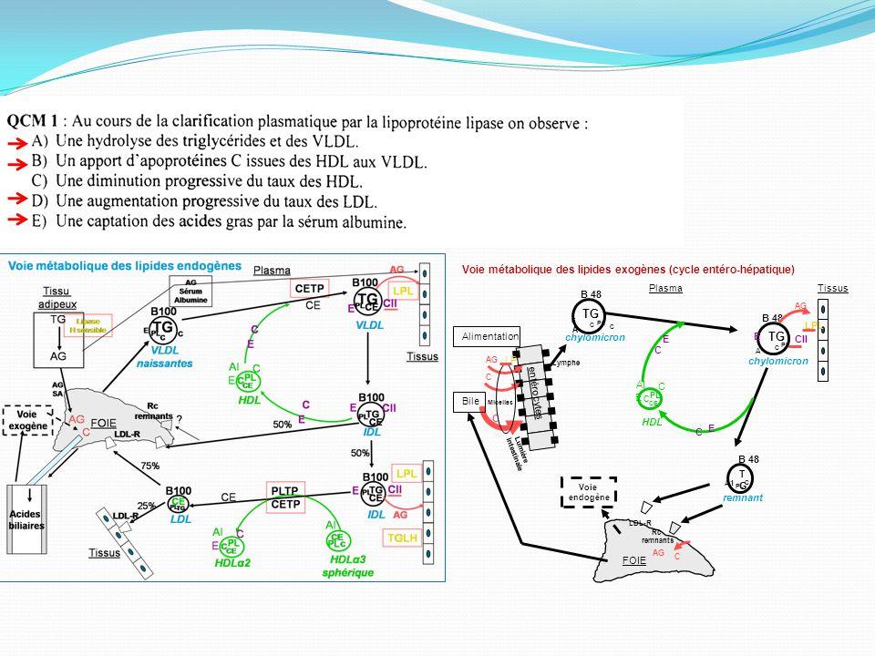 TG Voie métabolique des lipides exogènes (cycle entéro-hépatique) FOIE
