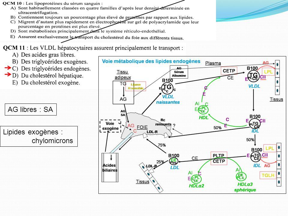AG libres : SA Lipides exogènes : chylomicrons