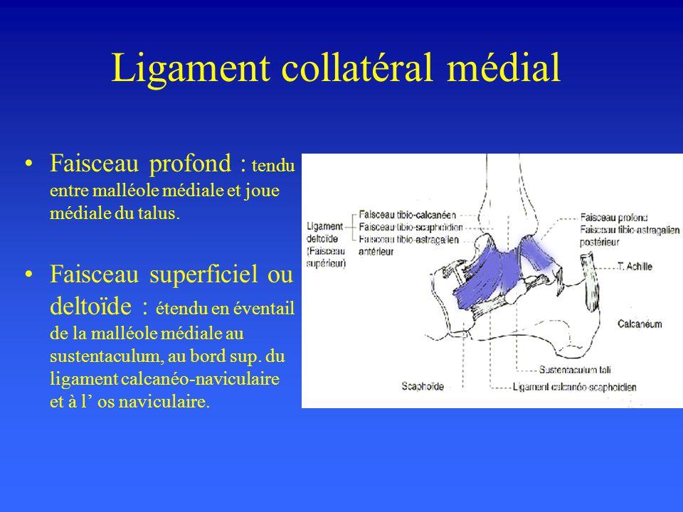 Ligament collatéral médial