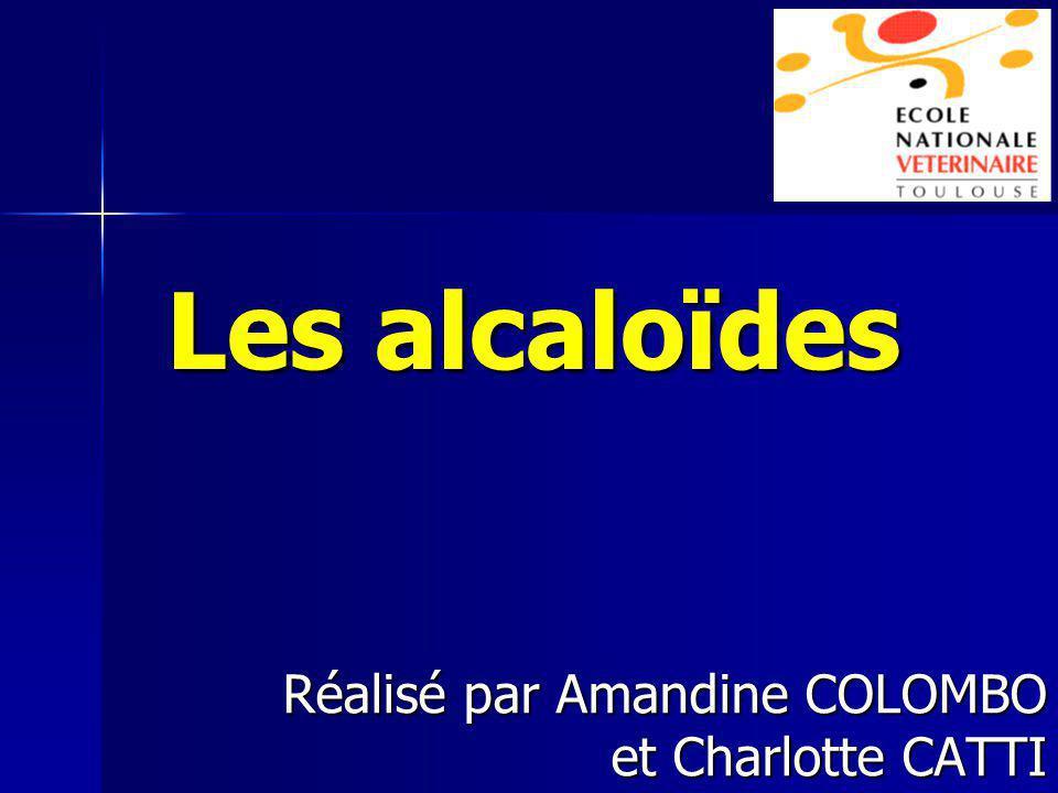 Réalisé par Amandine COLOMBO et Charlotte CATTI