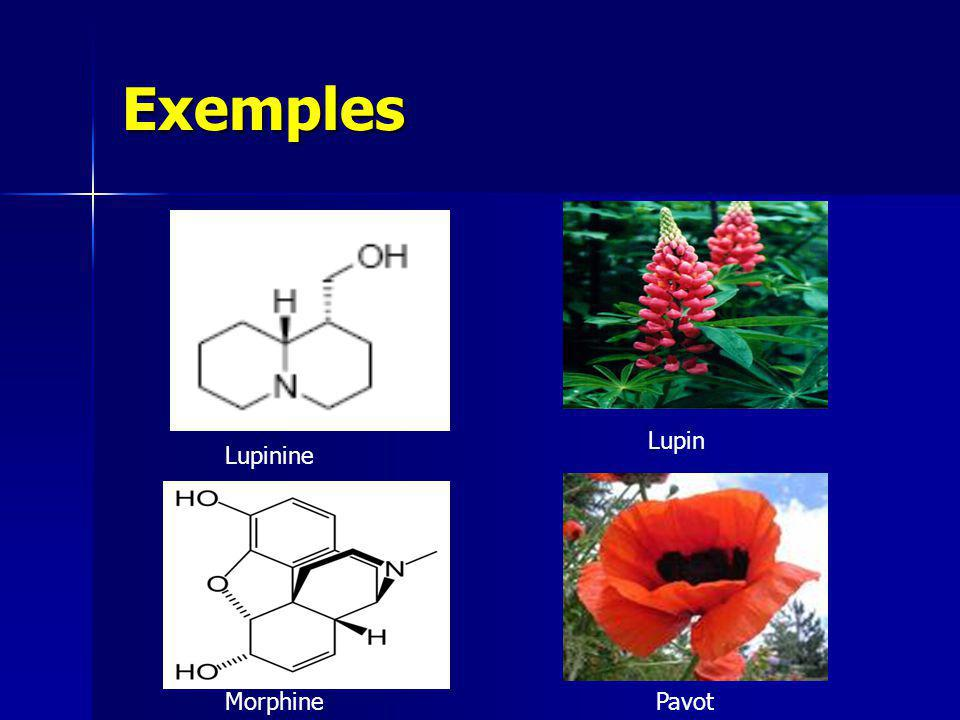 Exemples Lupin Lupinine Morphine Pavot