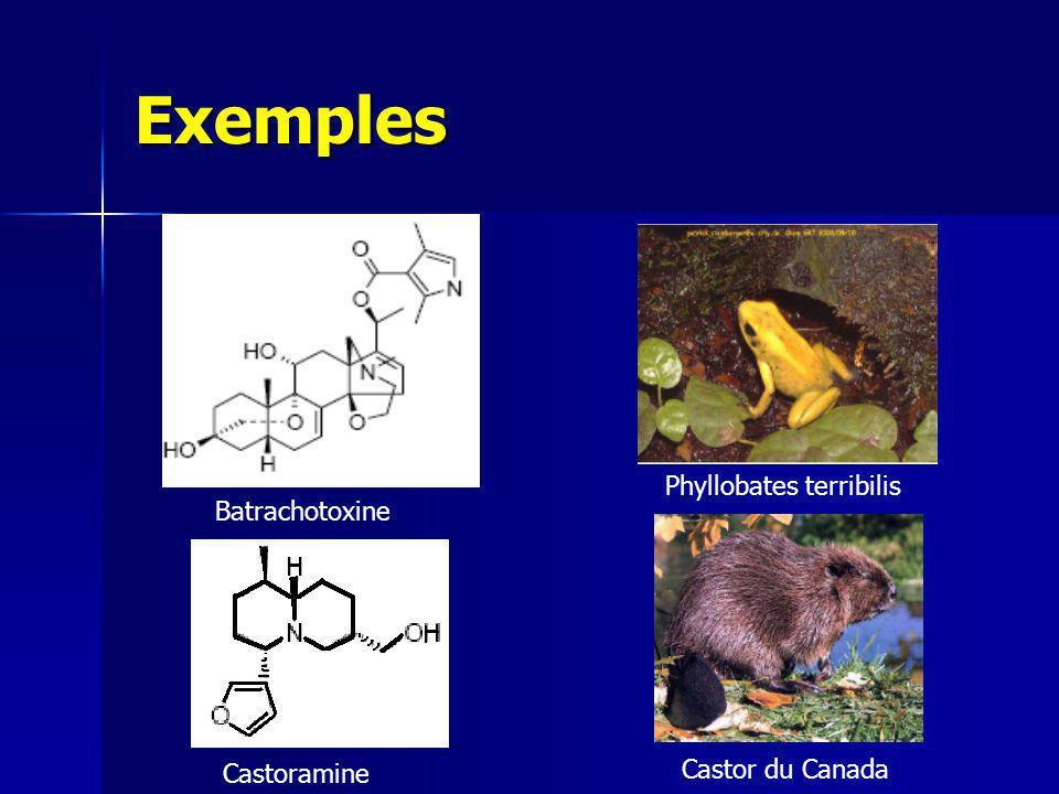 Exemples Phyllobates terribilis Batrachotoxine Castor du Canada