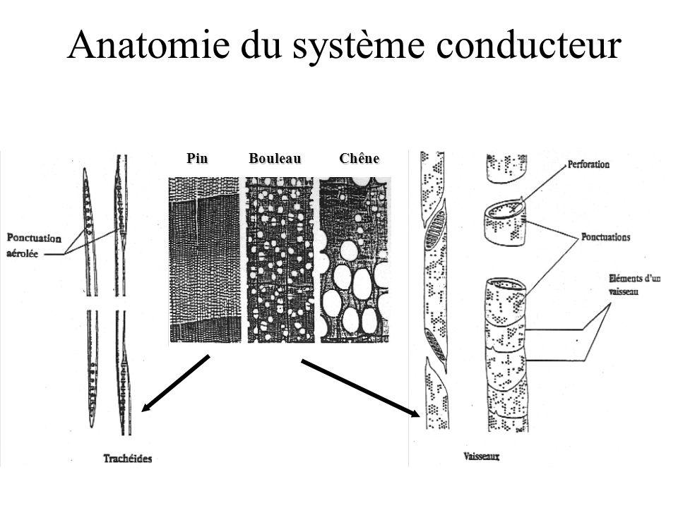 Anatomie du système conducteur