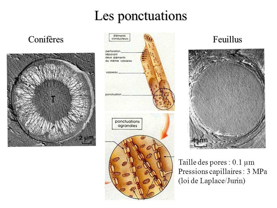 Les ponctuations Conifères Feuillus Taille des pores : 0.1 µm